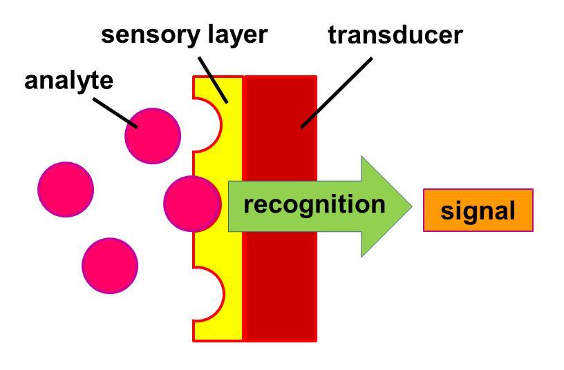 Bio Sensor