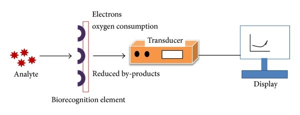 What Is A Biosensor Principle Types Of Biosensors And