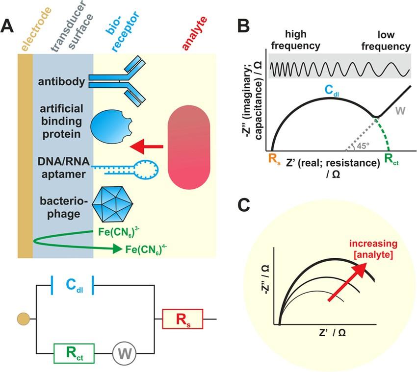 Impedimetric Biosensors