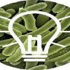 What is a Microbial Fuel Cell : Construction & Its Working