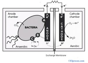 Microbial Fuel Cell Diagram