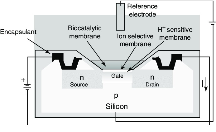What is a Biosensor - Principle, Types of Biosensors and